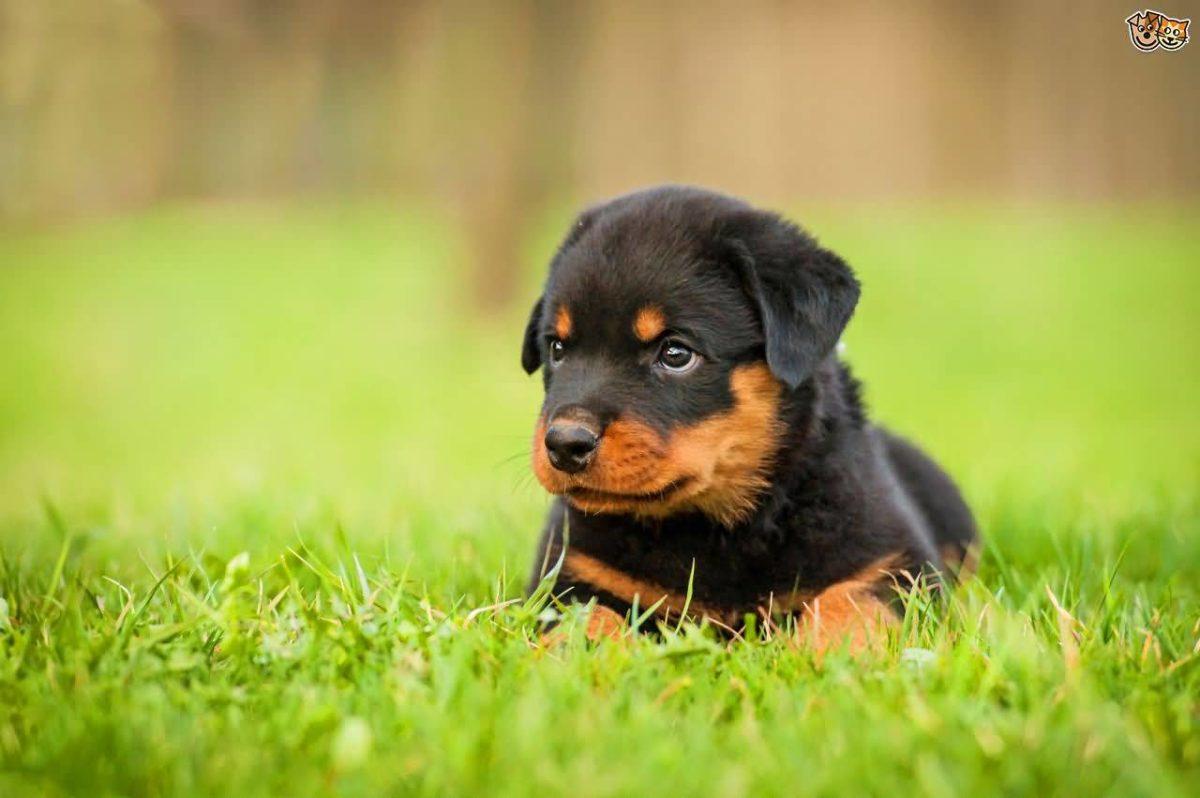 razze canine più amate dagli Italiani