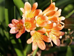 significato segreto fiori