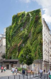 muro-vegetale-vantaggi