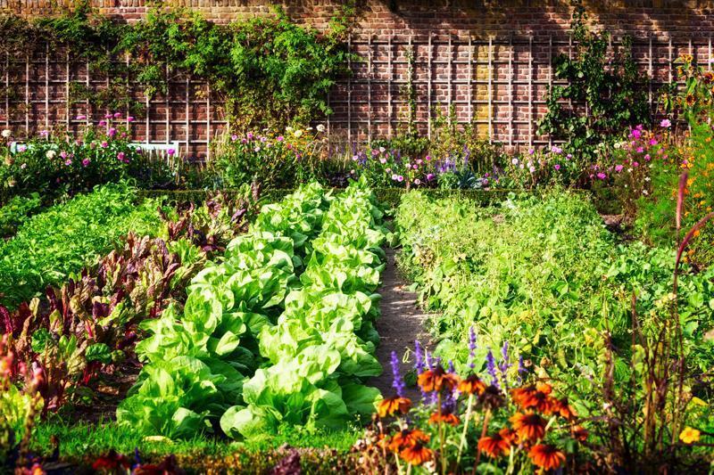 Come preparare il giardino