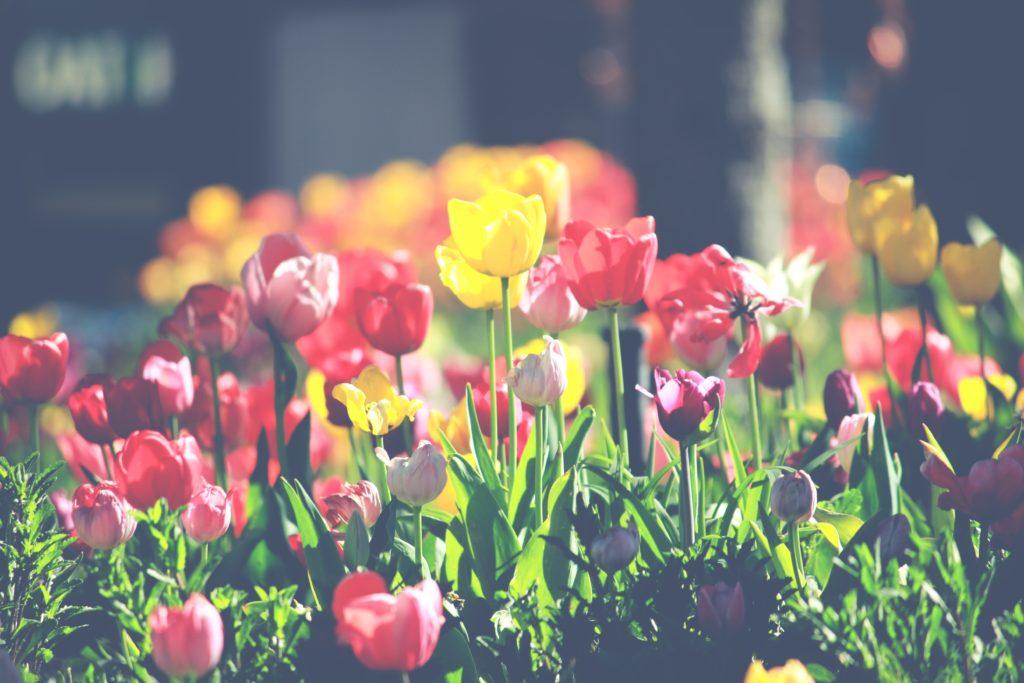 primavera la festa della rinascita