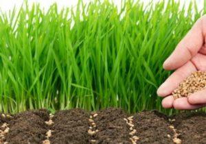 come preparare il terreno del giardino