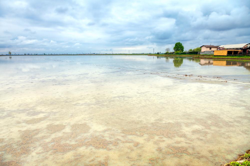 Lo specchio della terra: il mare a quadretti delle risaie a Vercelli