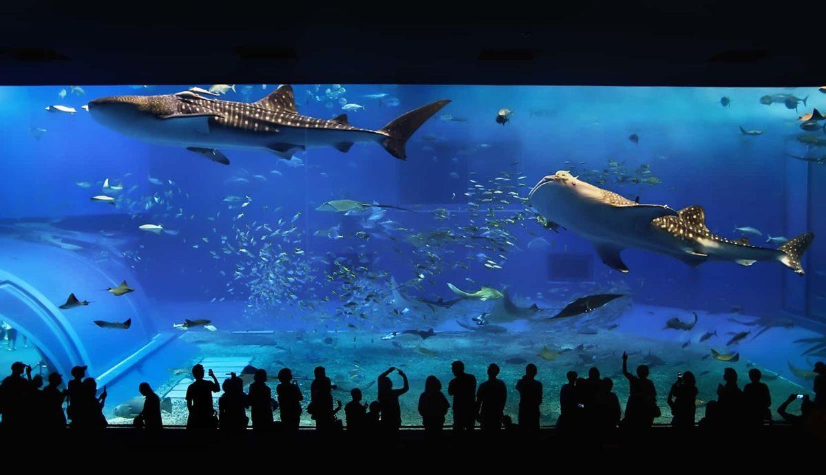 alberghi subacquei