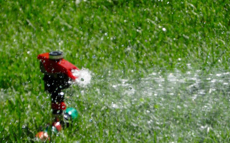 bagnare le piante d'estate