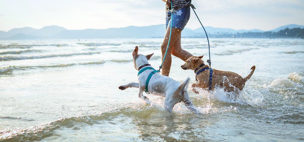 spiagge accessibili cani pet friendly