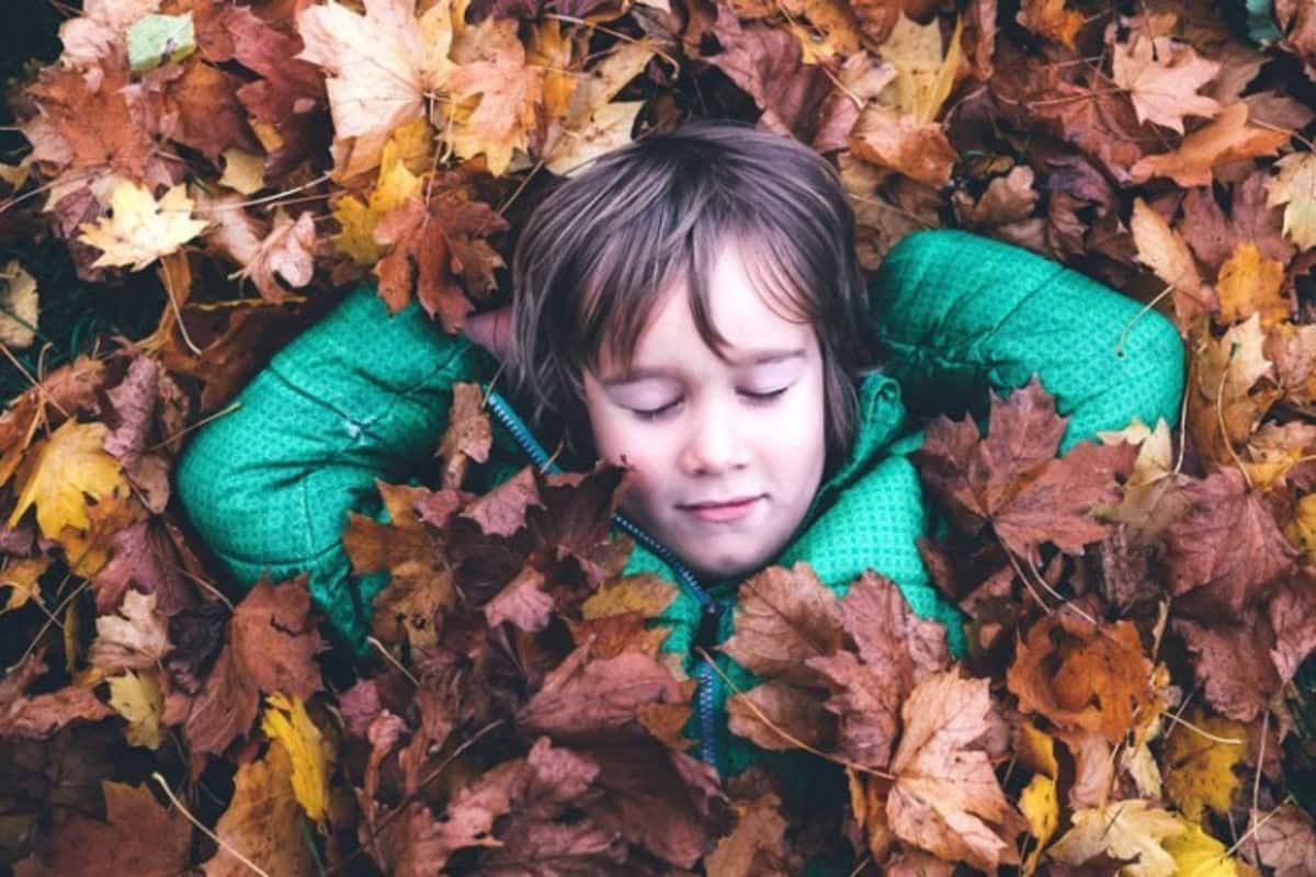 utilizzare le foglie secche