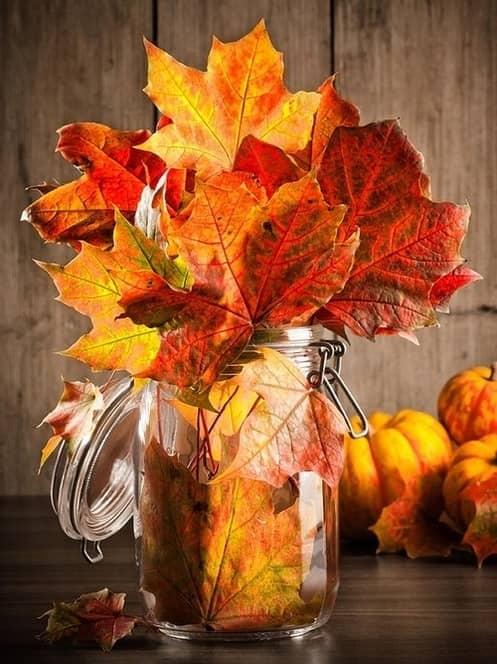 vasetti con foglie secche