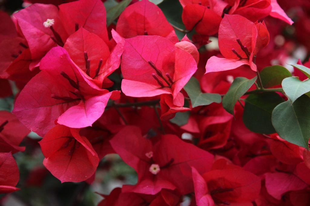 fiori come proteggere in inverno