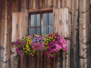 come proteggere le piante in inverno