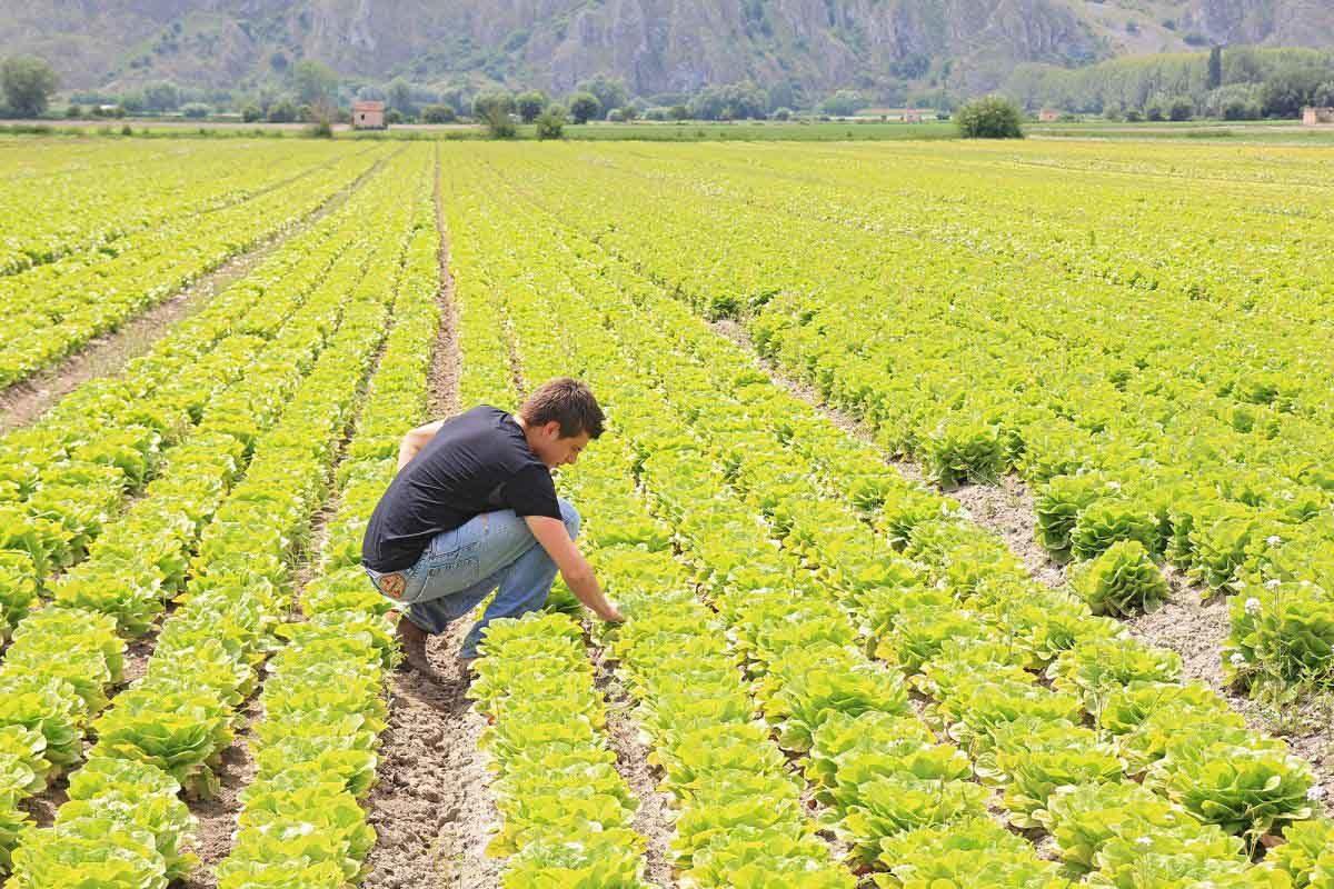 giovani agricoltori Millennials Farmers