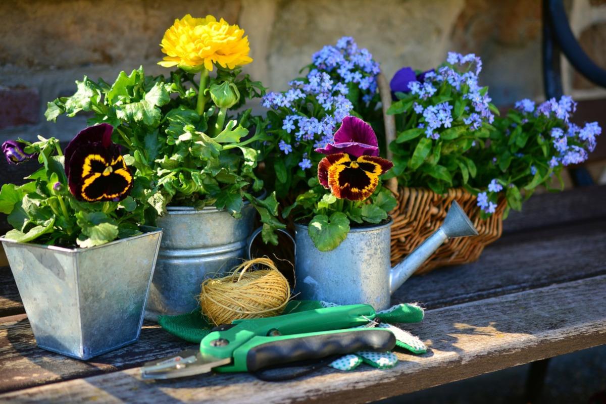 Febbraio, è il momento di pensare alle nostre piante - WWW.PIXABAY.COM