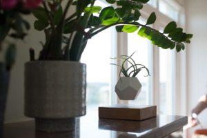 pianta fluttua aria habitante