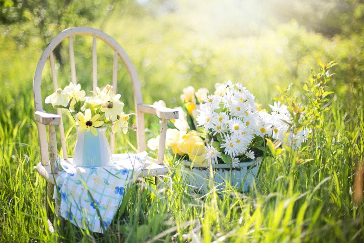 come prendersi cura delle piante nel mese di Marzo - www.pixabay.com
