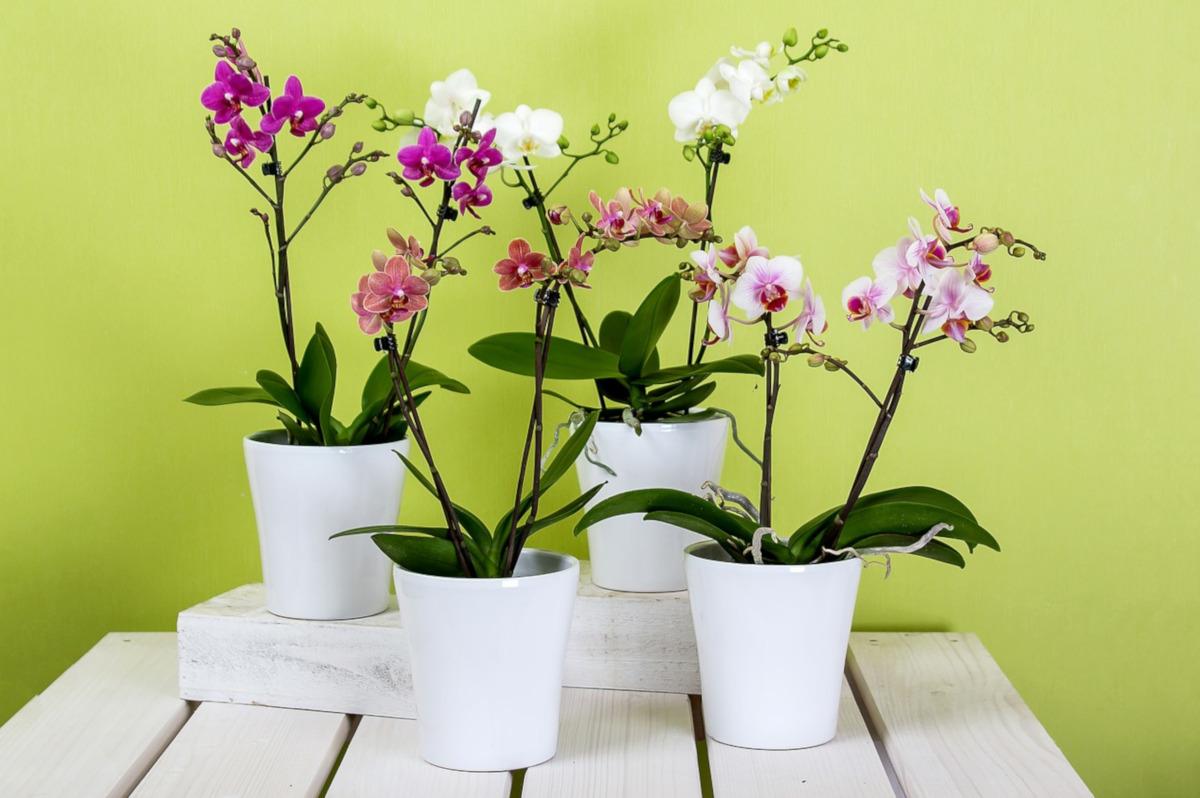 come prendersi cura delle orchidee nel mese di Marzo - www.pixabay.com