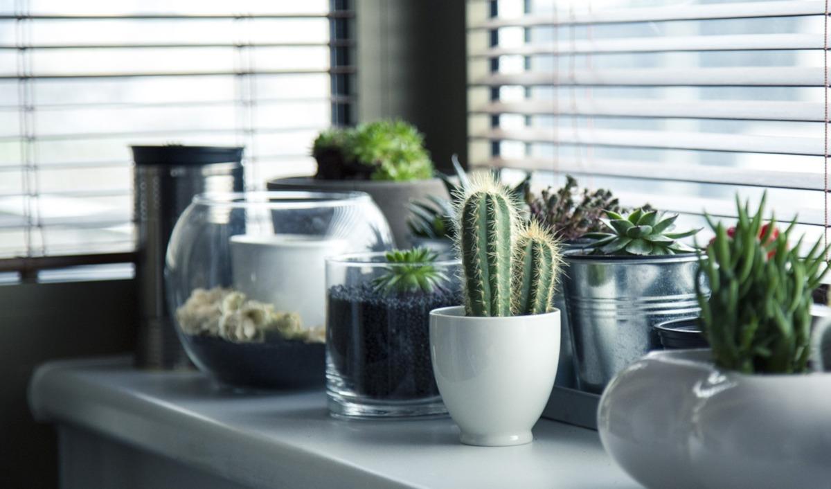 come prendersi cura delle piante grasse nel mese di Marzo - www.pixabay.com