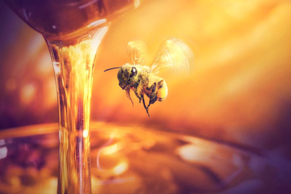 miele non scade mai habitante