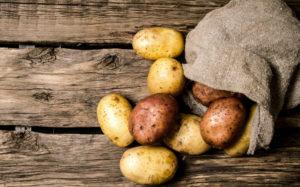 Il raccolto di maggio: patate novelle