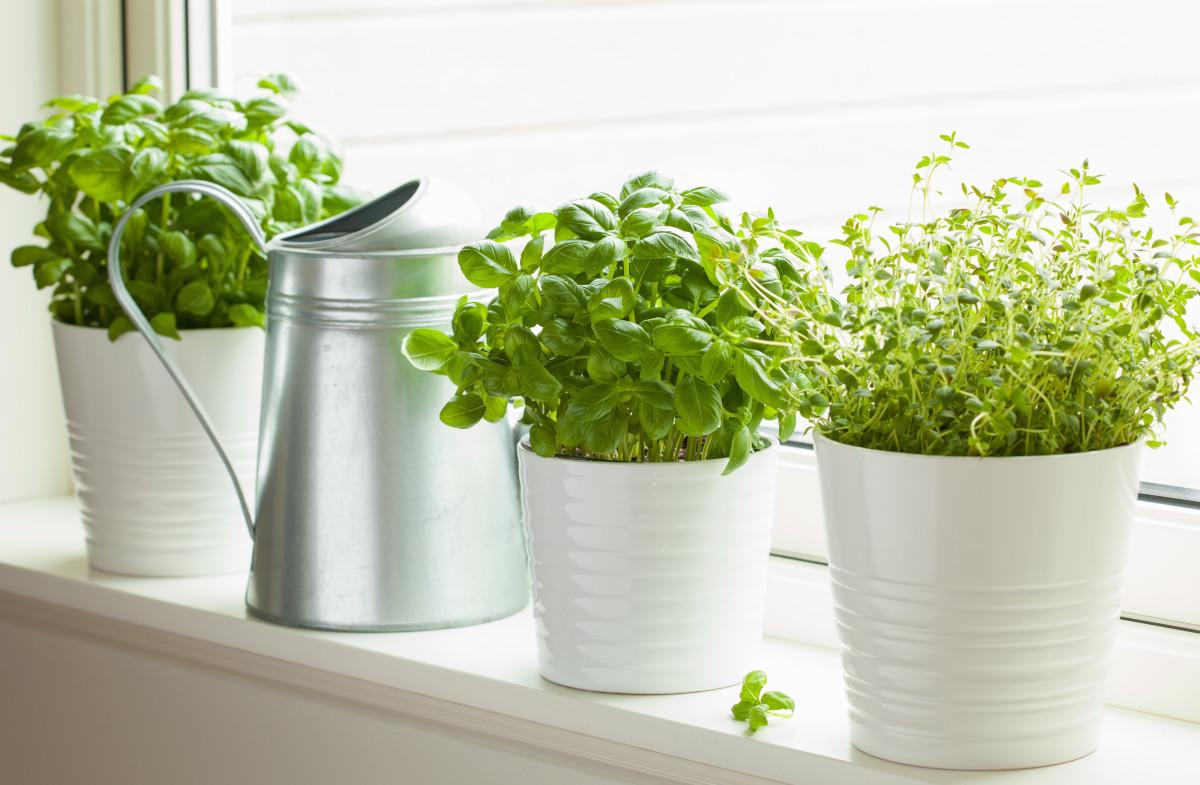 Il raccolto di maggio: erbe aromatiche