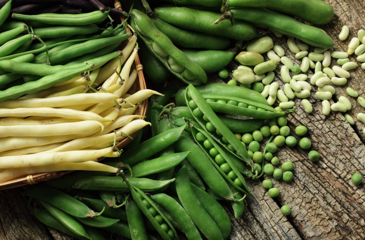 Il raccolto di maggio: fave e piselli