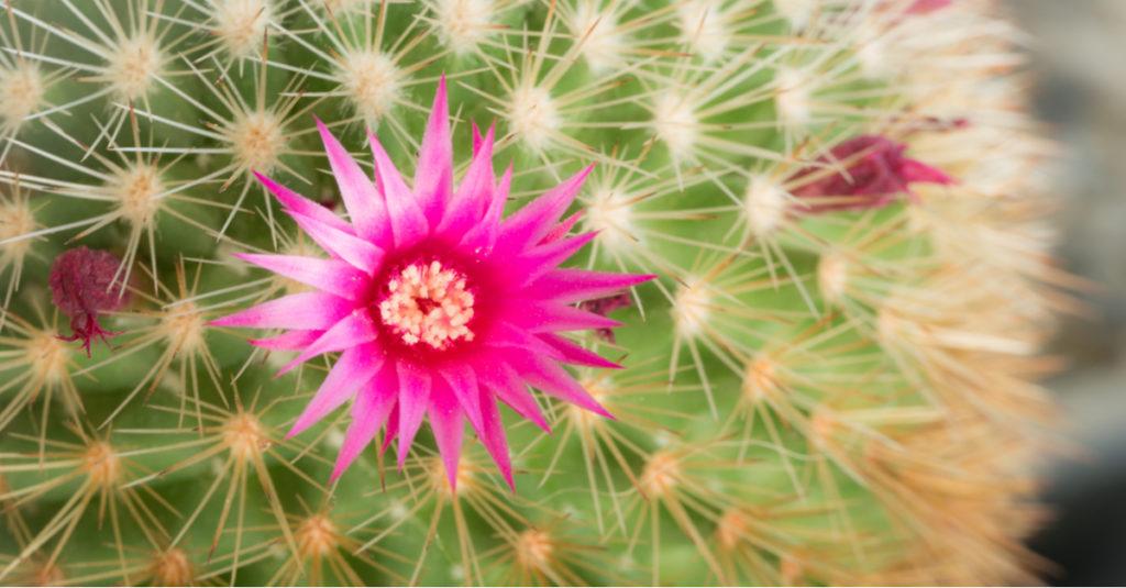 Fiore pianta grassa