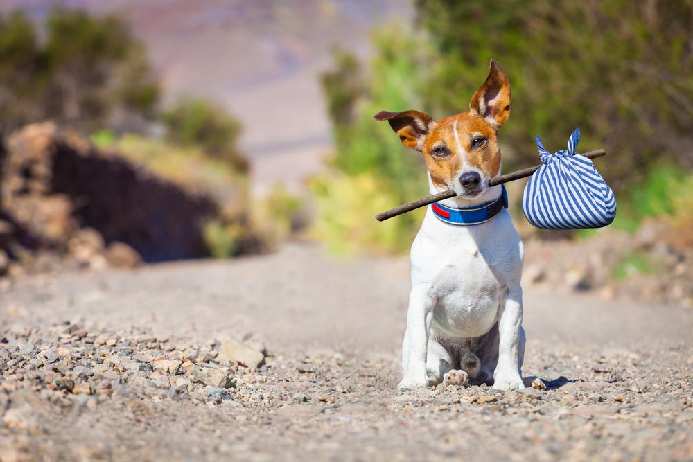 quanti cani vengono abbandonati