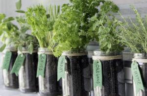 Le piante aromatiche da coltivare sul balcone