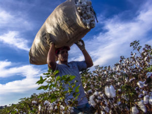 L'ecosostenibilità di OVS
