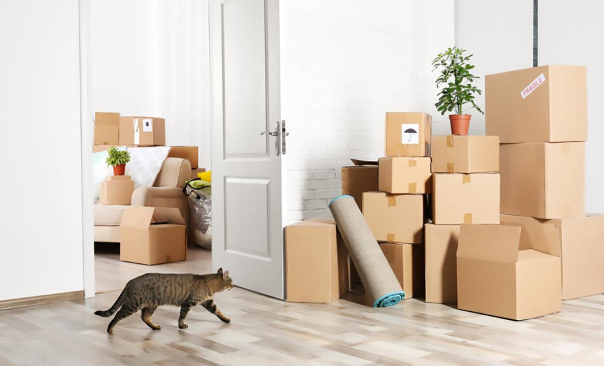 Quando il gatto cambia casa: lo stress da trasloco