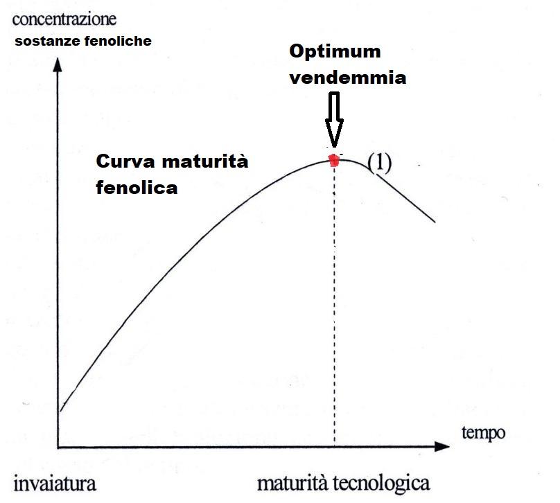 grafico maturazione uve