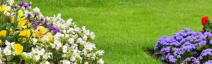 Lavori in giardino nel mese di agosto
