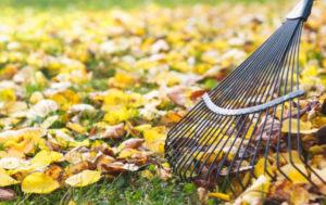 Lavori in giardino nel mese di ottobre