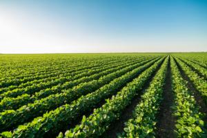 Il FAO a favore di un'alimentazione più sana