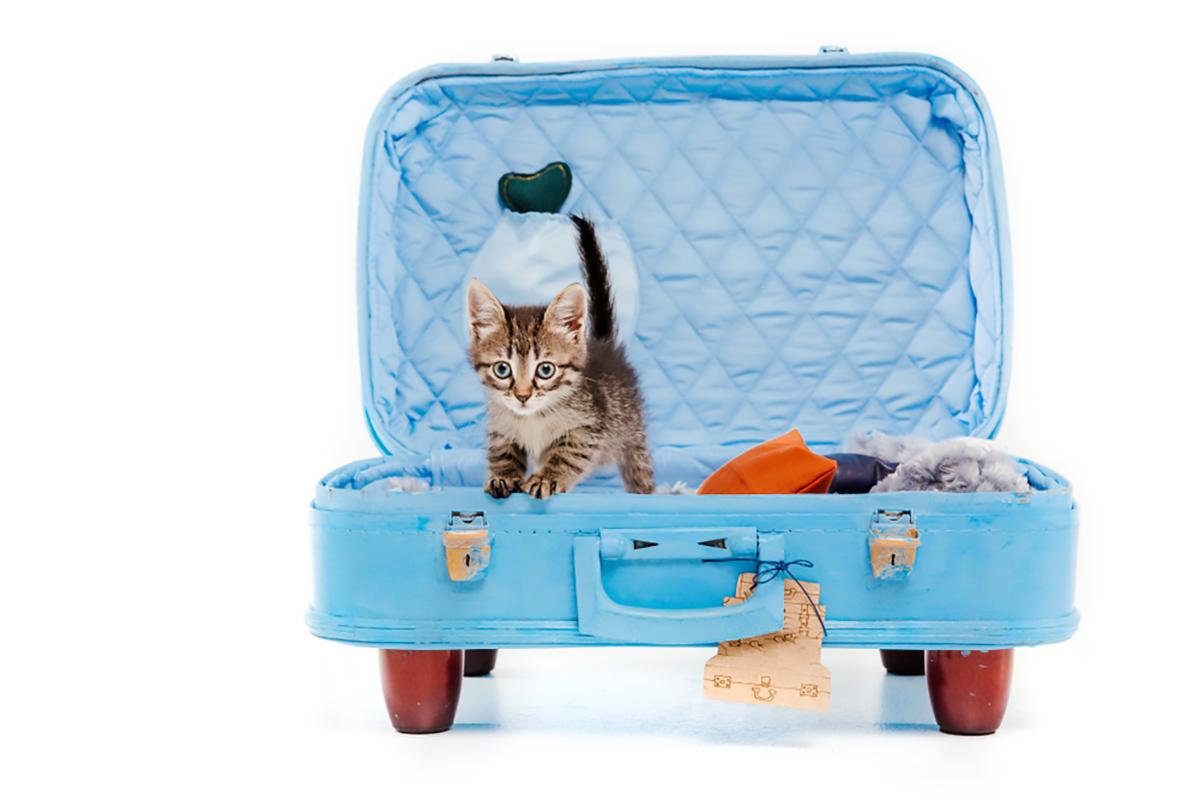 Gatto in valigia riuso creativo