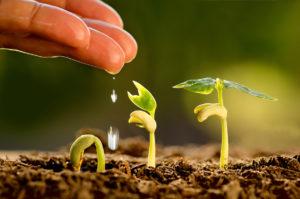 I vantaggi di un'agricoltura sostenibile