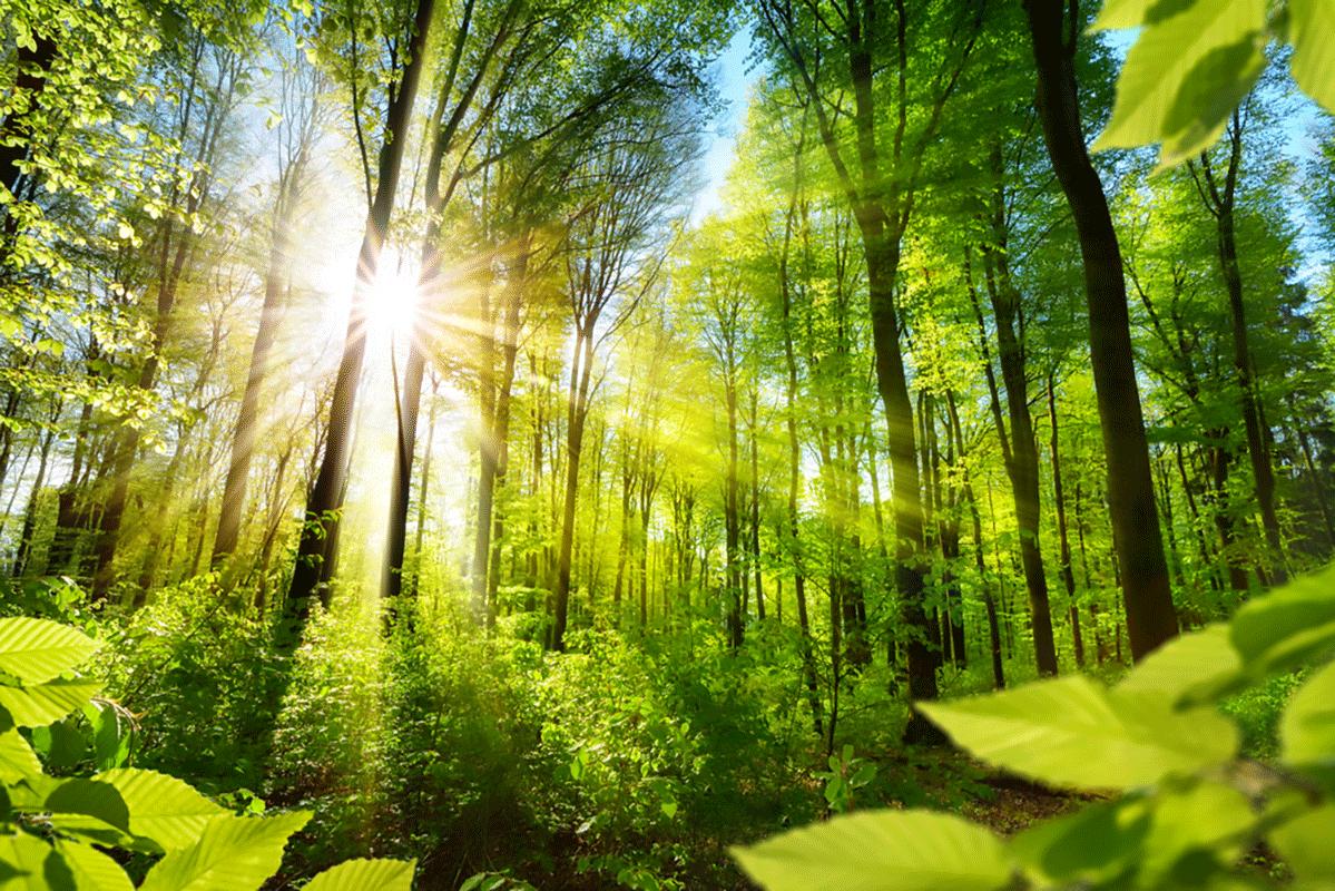 Irlanda sempre più green: pianterà 440 milioni di alberi nei prossimi 20 anni