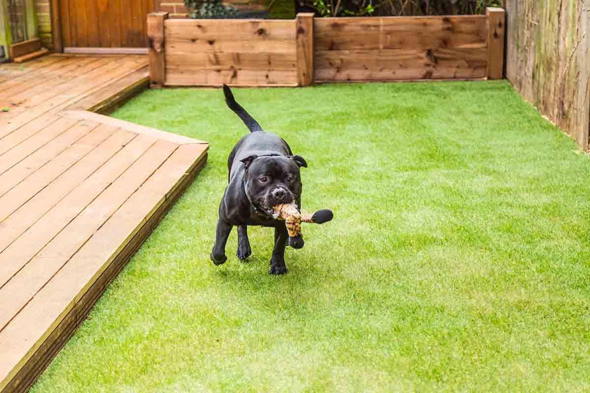 Avere un giardino curato e un cane