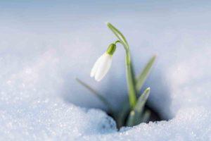 Ecco quali sono i fiori invernali resistenti al freddo