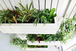 Giardino verticale: tutto ciò che c'è da sapere