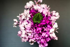 Il Ciclamino, un fiore che colora le nostre case