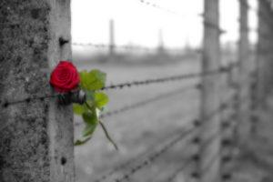 La Giornata della Memoria: perché e cosa è importante ricordare?