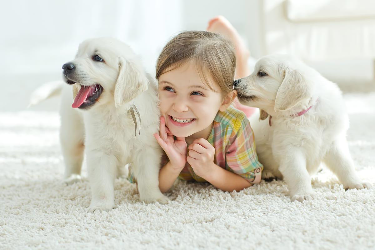 quanto costa avere un cane in casa