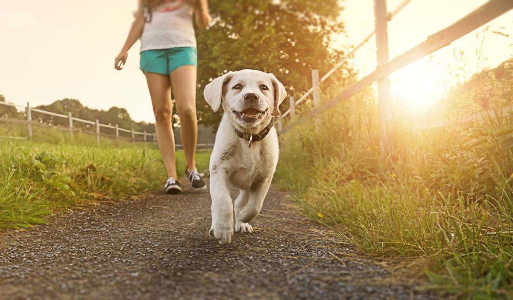 Abitare con animali domestici rende felici e mantiene in forma passeggiata con cane