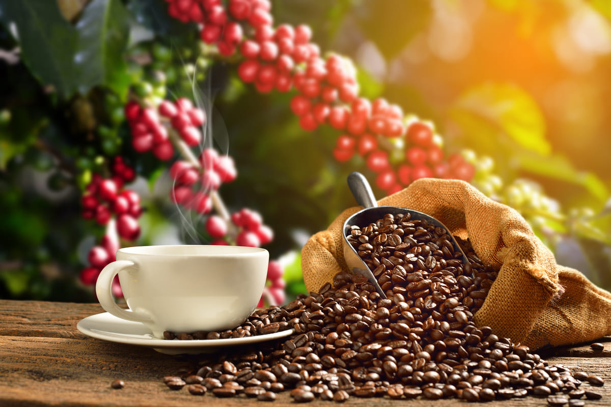 Caffè: proprietà e benefici