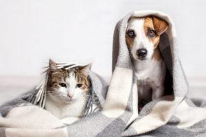 piante tossiche per cani e gatti