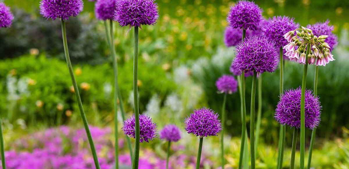 fiori e allergie