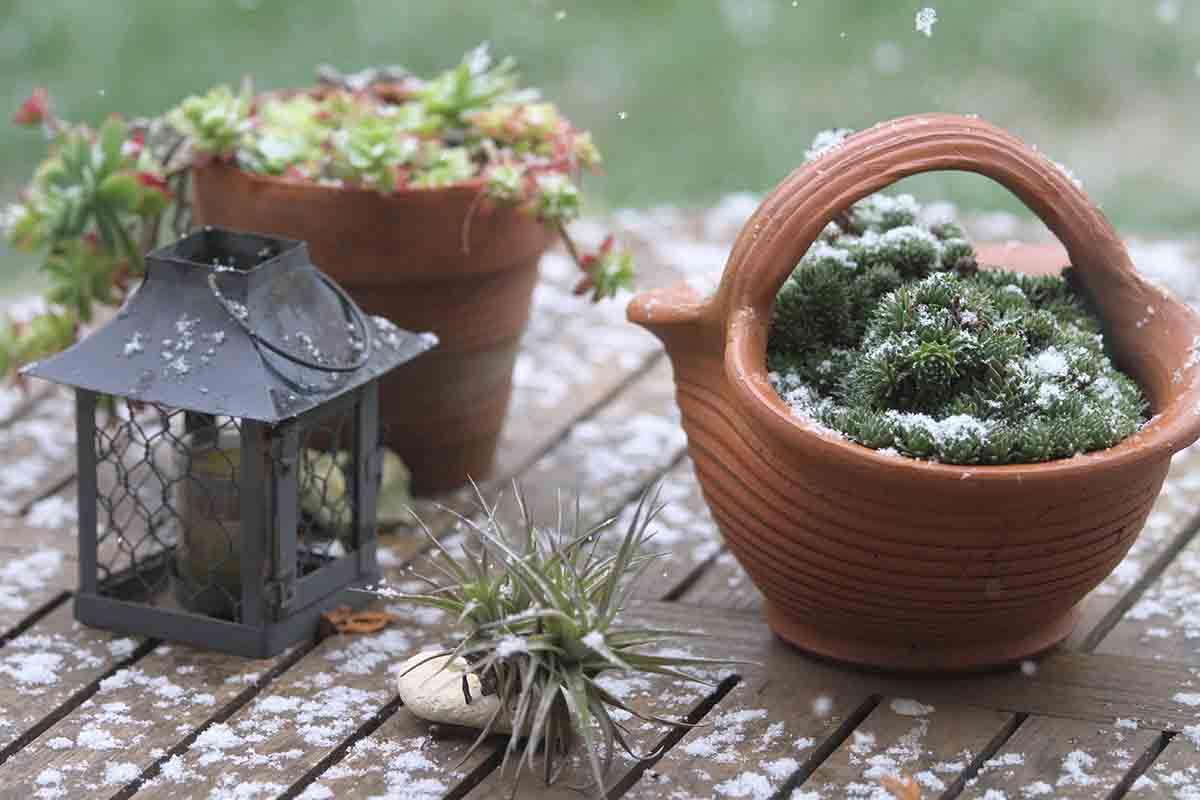Lavori di gennaio e febbraio in giardino