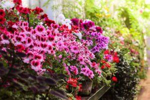 Un giardino fiorito tutto l'anno: piante e fiori da coltivare