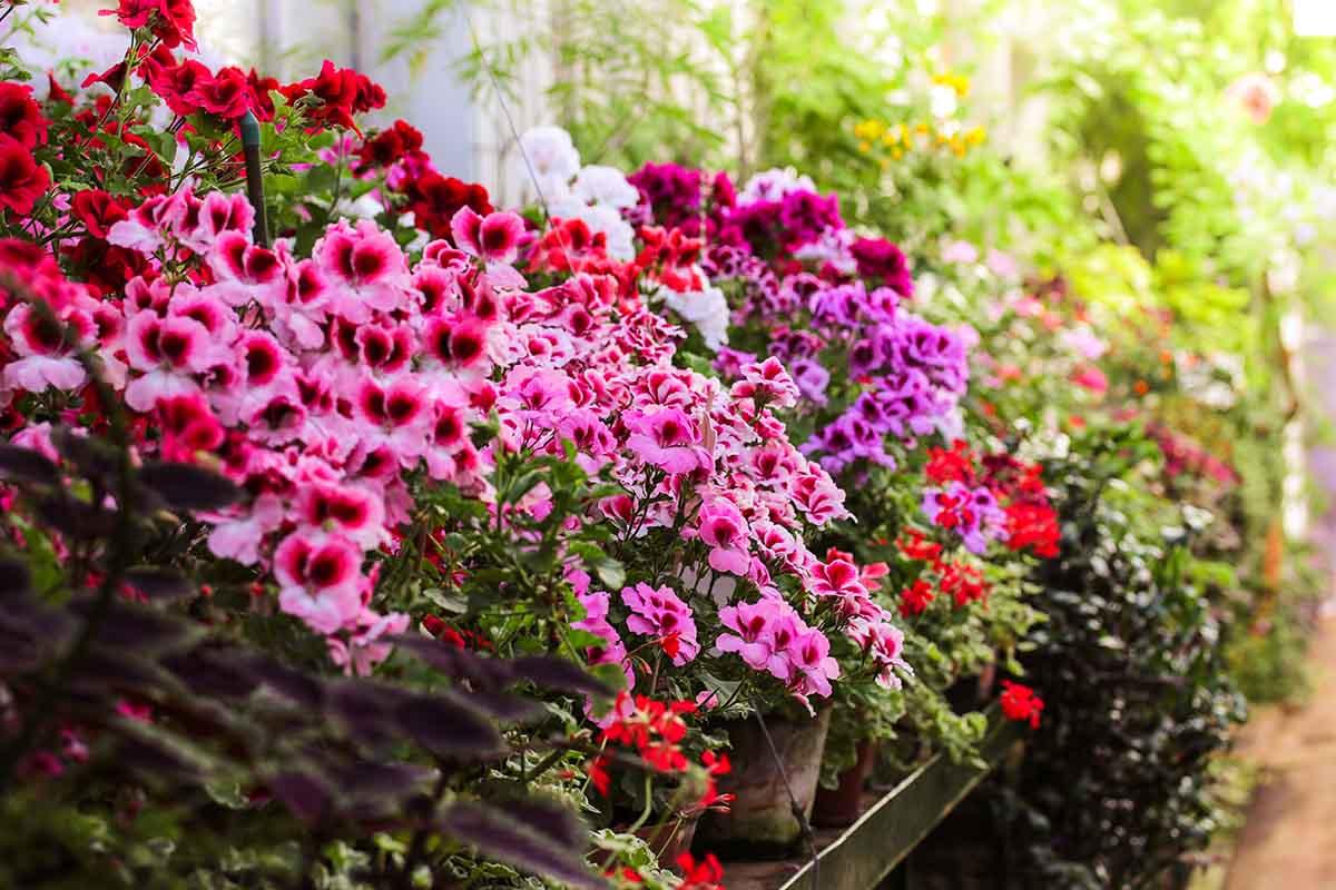 Fiori Da Balcone Perenni un giardino fiorito tutto l'anno: piante e fiori da coltivare