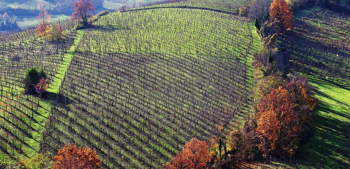 Parma Langhirano